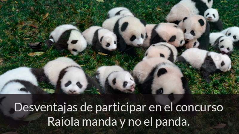Desventajas de participar en el concurso Raiola manda y no el panda.